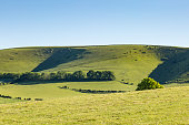 A green hilly landscape taken in the South Downs, Sussex, with a blue sky behind.