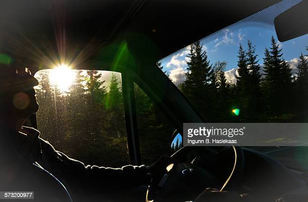 Evening sun and trees seen from inside the mobile home when driving