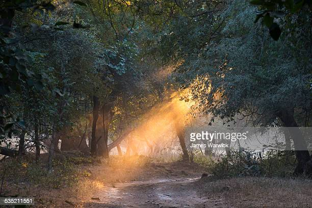 Evening sun rays falling on forest track