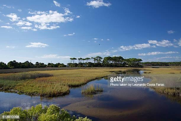 Everglade
