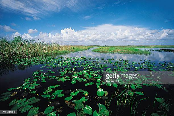 Everglades, Florida, USA