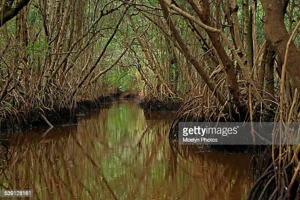 Everglades National Park-Mangrove Swamps
