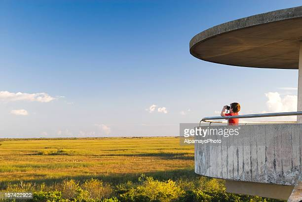 Everglades: Observation Tower - IV