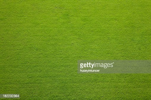 Evergreen grass texture background