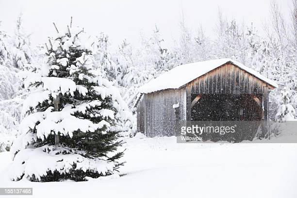 Evergreen Tree and Old Rural Garage in Winter Snow Blizzard