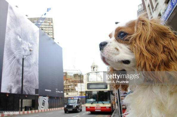 Everybody wants to be a cat Oscar the Cavalier King Charles Spaniel sizes up to the new art installation at Nova Victoria on November 1 2013 in...
