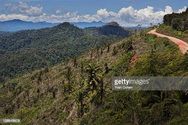 Evidence of deforestation in the Limbang area of Sarawak With the support of the Malaysian government logging companies have devastated huge areas of...