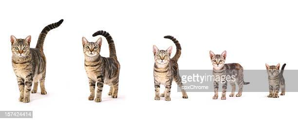 Evolution of a Cat