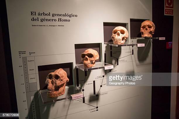 Evolution of Homo Sapiens archaeology museum Jerez de la Frontera Cadiz Province Spain