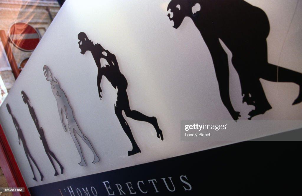 Evolution of man in pictures - Homo erectus. : Stock Photo