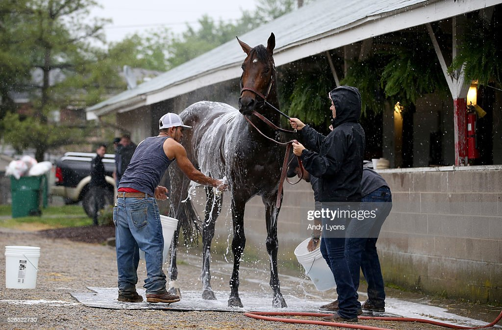 Exaggerator is washed in the barn area during the Morning training for the 2016 Kentucky Derby at Churchill Downs on April 30, 2016 in Louisville, Kentucky.