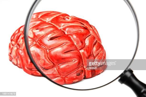 Examining A Brain