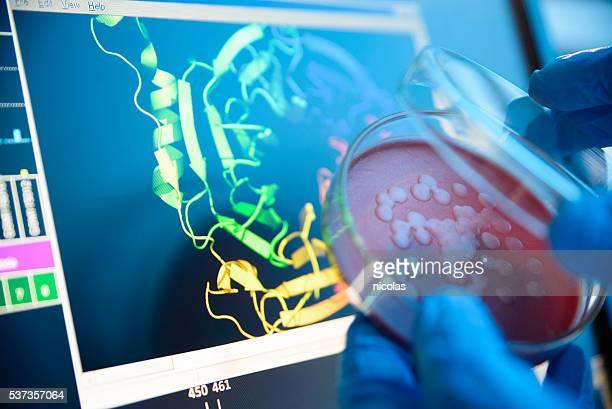 Untersuchen einer Petrischale