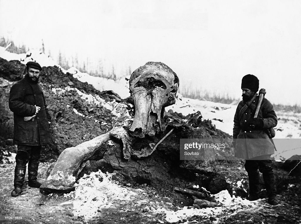 Excavation of frozen woolly mammoth remains near the berezovka river in the magadan region of russia 1902