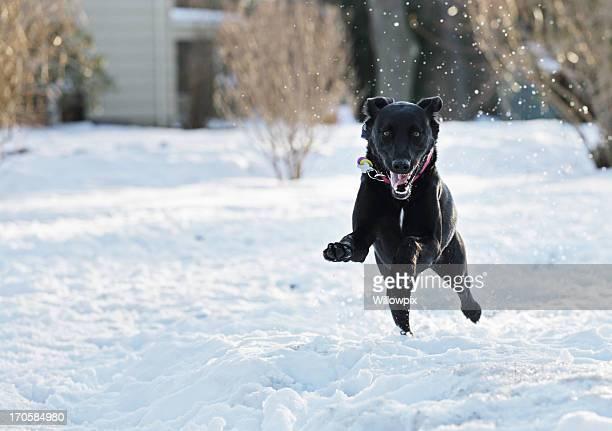 Glücklich Hund springen durch Schnee