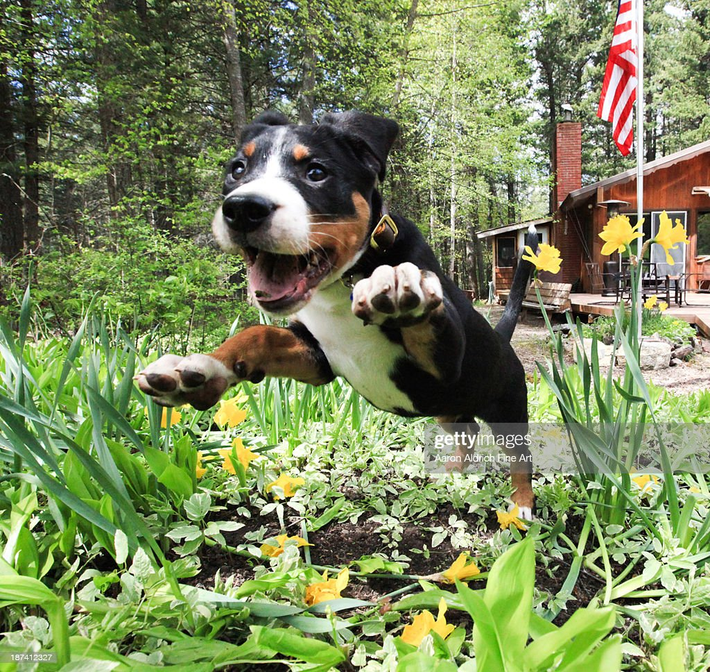 Excited for spring! : Stock Photo