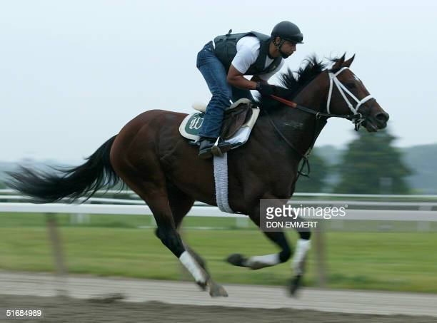 Exercise rider Alfredo Loriano rides Proud Citizen 06 June 2002 at Belmont racetrack in Elmont NY Proud Citizen will race 08 June for horse racing's...