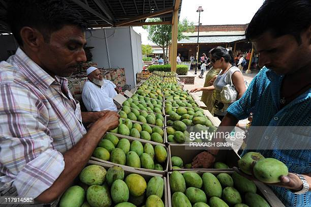 Exhibitor arranges different varieties of mangos during a Mango festival organised by Delhi Tourism in New Delhi on July 2 2011 The festival is...