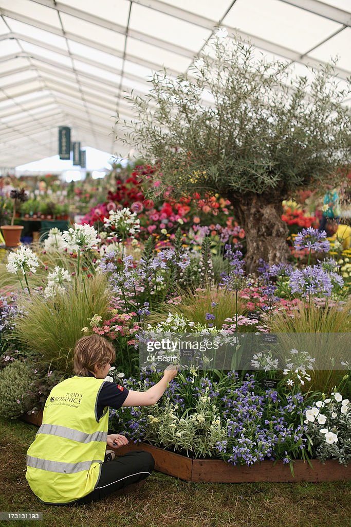 Exhibitors prepare their displays in the Floral Marquee at the Hampton Court Palace Flower Show on July 8, 2013 in London, England. Hampton Court Palace Flower Show opens to the public tomorrow and runs until July 14, 2013. It is the world's largest flower show with over 600 exhibitors spread over 34 acres.