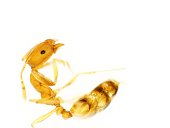 Cell, Photographic Slide, Science, Anatomy, Ant