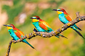 Exotic little birds sit on the branches, bright colors, wonders of nature