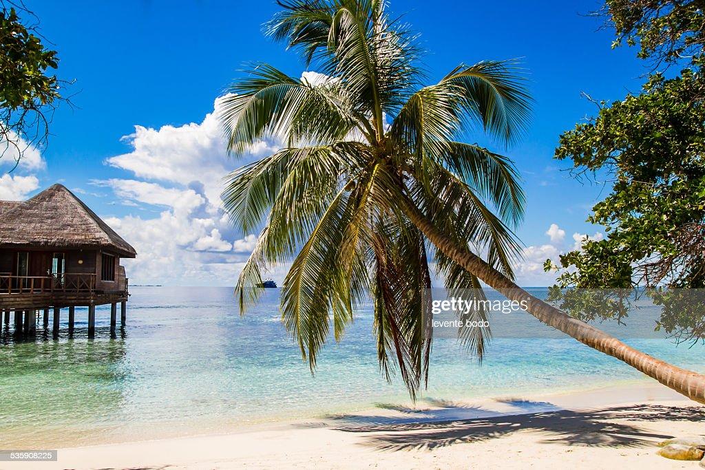 Exotic palm tree on white sand beach luxury resort : Stock-Foto