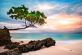 Exotic seascape with sea grape tree leaning above a rocky Caribbean beach at sunset, in Cayo Levantado, Dominican Republic