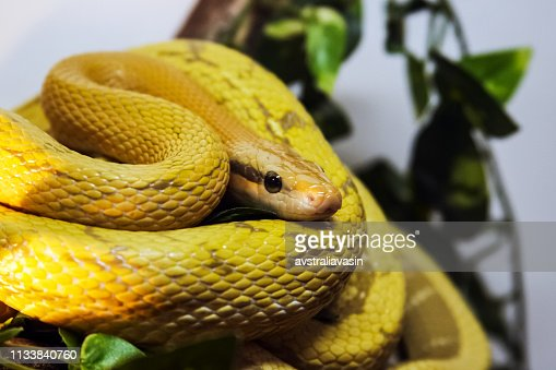 Exotic Snake In The Terrarium Stock Photo Thinkstock