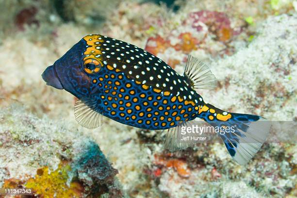 Exotic tropical fish on coral reef