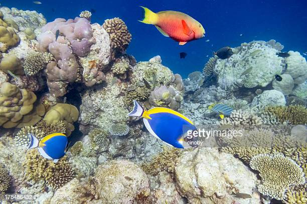 Exotic Underwater World