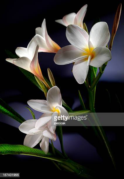 Exotic White Flowers