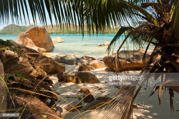 Exotic white sand paradise beach with palm trees and rocks
