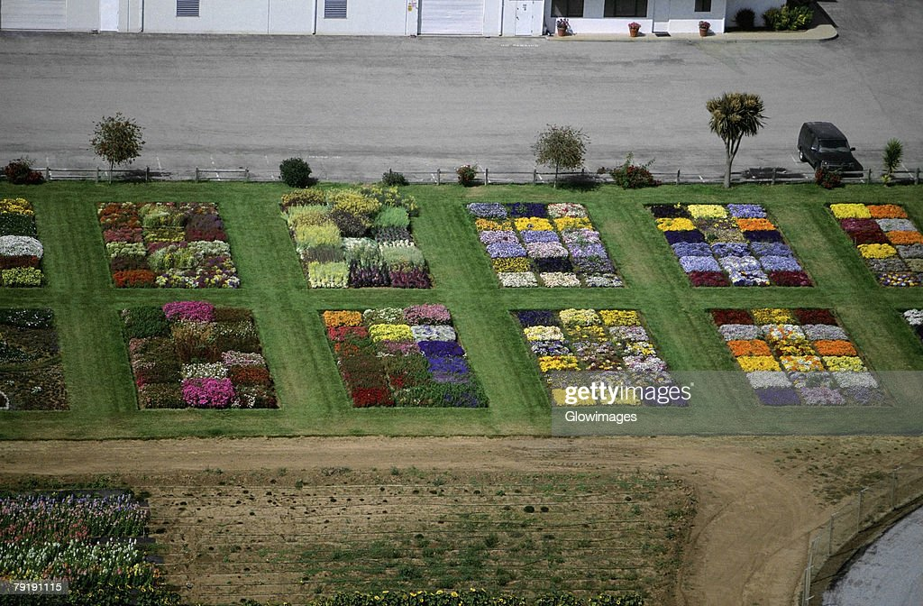 Experimental flower plots  : Stock Photo