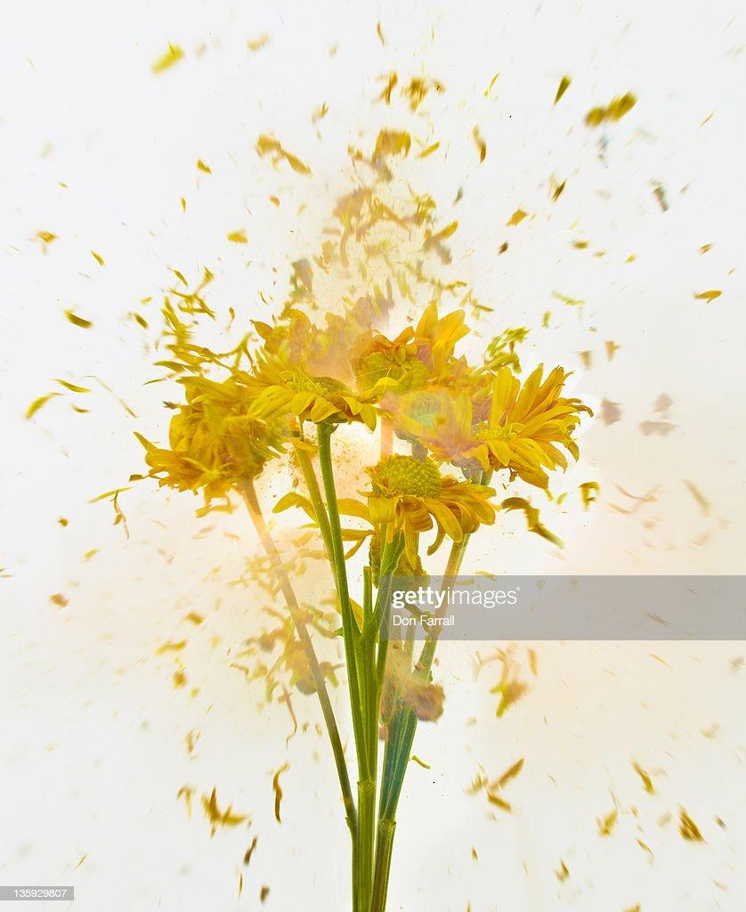 Exploding Flowers : Stock Photo