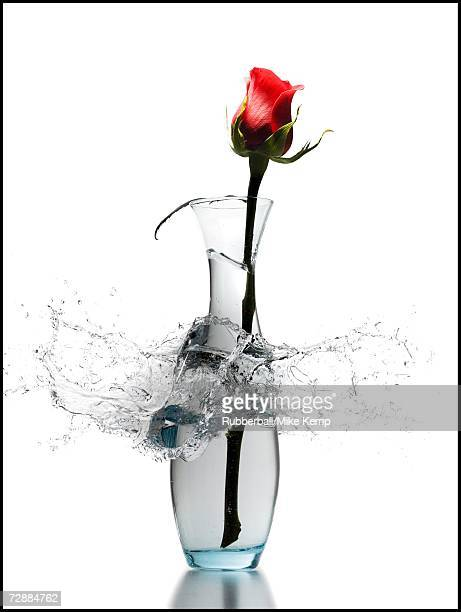 Exploding vase with red rose