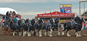 Express Employment Professionals wagon during the GMC Rangeland Derby's nine chuckwagon races at the Calgary Stampede 2016 On Thursday 14 July 2016...