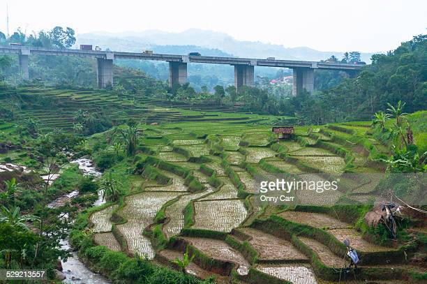 Expressway over rice fields