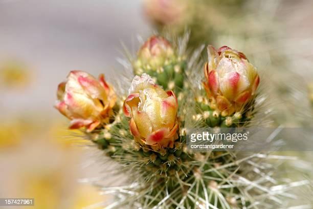 Exquisite Cactus Bloom