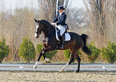 A beautiful woman riding perfect extended gallop on a dressage competition. Canon Eos 1D MarkIII.