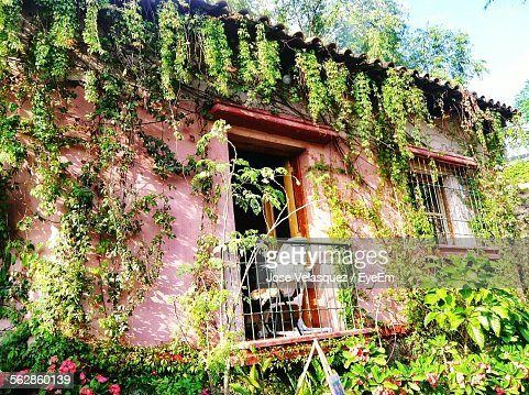 Exterior Of House With Plants Growing