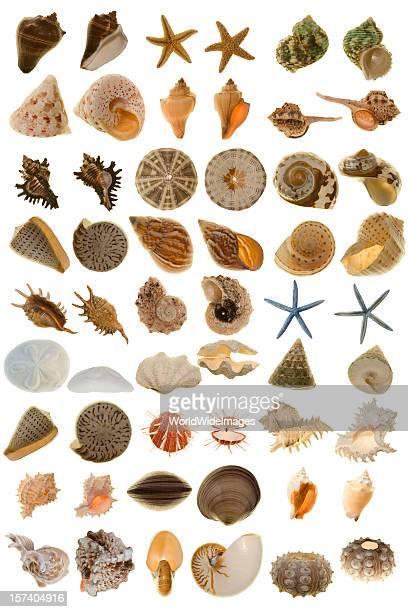 Extra grande vários Shell do mundo