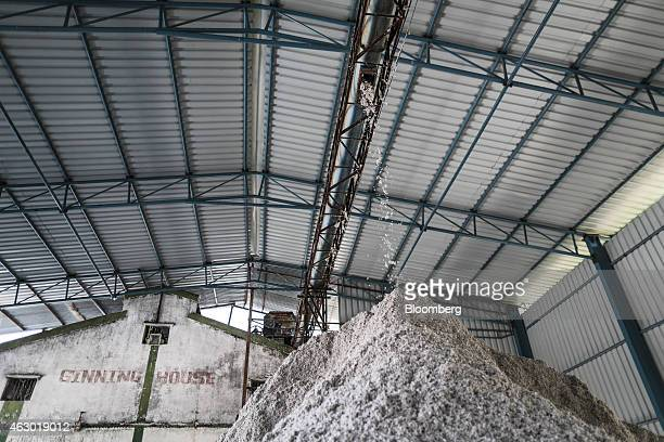 Extracted cotton seeds fall into a pile at a ginning mill in Yavatmal Maharashtra India on Wednesday Feb 4 2015 In a country where as many as one in...