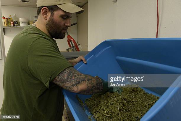 Extractor Frank Bianco breaking up dried marijuana to make Charlotte's Web a highCBD strain bred by the Realm of Caring at the ROC labs LLC August 07...