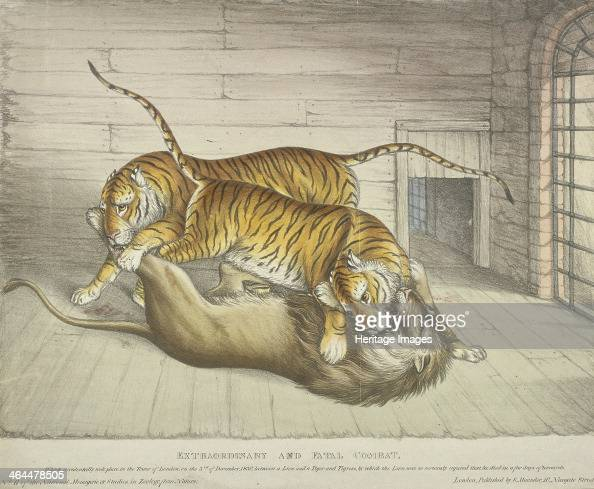 'Extraordinary and Fatal combat which accidentally took place in the Tower of London [menagerie] on the 3rd of December 1830 between a Lion and a...