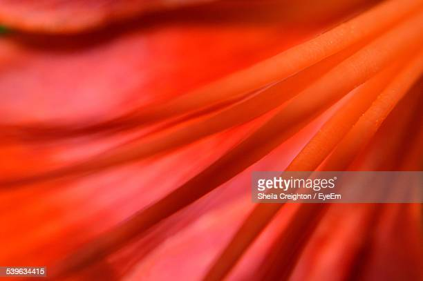 Extreme Close Up Of Flower Stamen