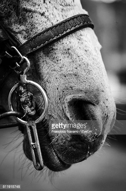 Extreme close up of horse snout