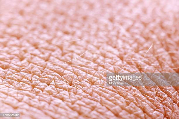 Extreme close up of human skin