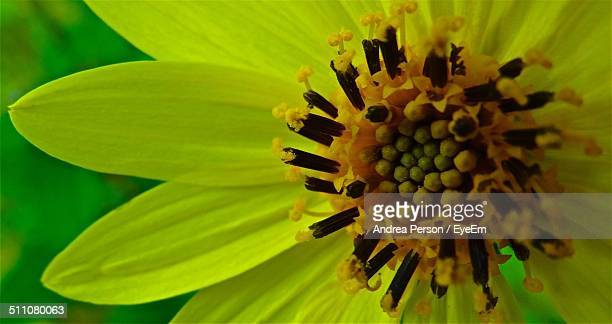 Extreme close up of yellow flower