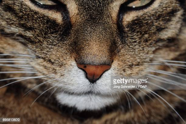 Extreme close-up of a cat nose