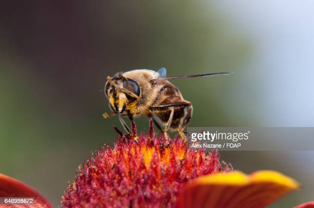 Extreme close-up of bee on flower